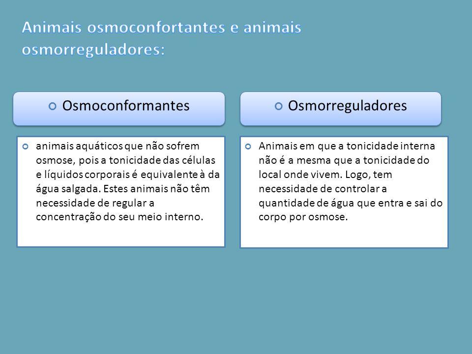 Osmoconformantes Osmorreguladores animais aquáticos que não sofrem osmose, pois a tonicidade das células e líquidos corporais é equivalente à da água