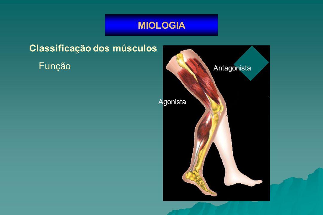 Flexor superficial dos dedos Nomenclatura dos músculos MIOLOGIA Adutor magno Depressor do ângulo da boca Braquioradial