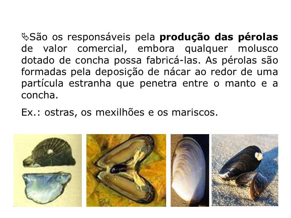 São os responsáveis pela produção das pérolas de valor comercial, embora qualquer molusco dotado de concha possa fabricá-las. As pérolas são formadas