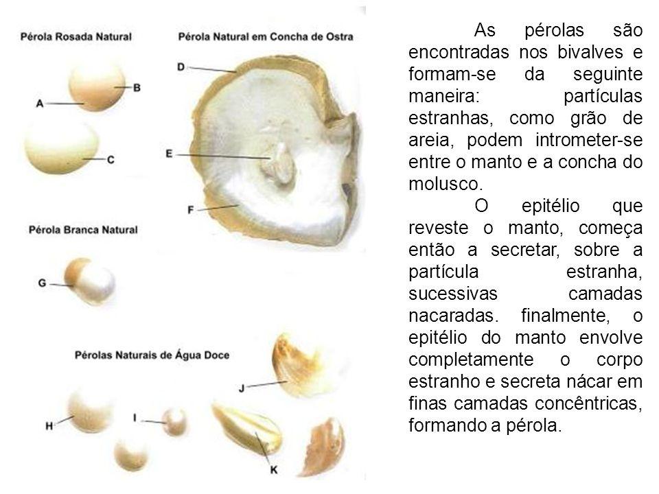 As pérolas são encontradas nos bivalves e formam-se da seguinte maneira: partículas estranhas, como grão de areia, podem intrometer-se entre o manto e