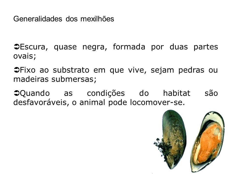 Generalidades dos mexilhões Escura, quase negra, formada por duas partes ovais; Fixo ao substrato em que vive, sejam pedras ou madeiras submersas; Qua