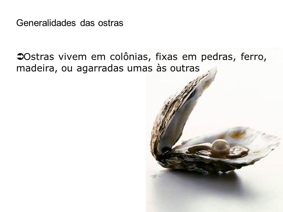 Generalidades das ostras O stras vivem em colônias, fixas em pedras, ferro, madeira, ou agarradas umas às outras