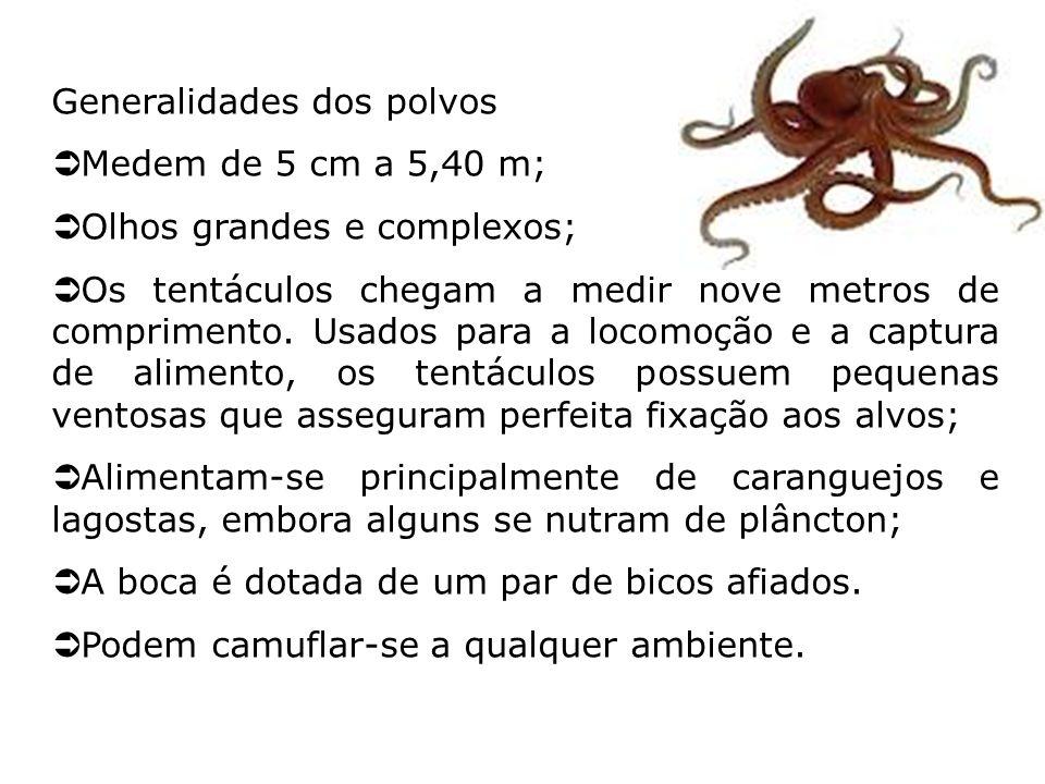 Generalidades dos polvos Medem de 5 cm a 5,40 m; Olhos grandes e complexos; Os tentáculos chegam a medir nove metros de comprimento. Usados para a loc
