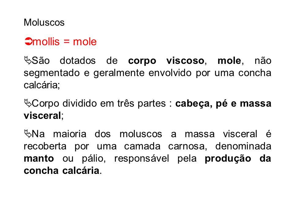 Moluscos mollis = mole São dotados de corpo viscoso, mole, não segmentado e geralmente envolvido por uma concha calcária; Corpo dividido em três parte