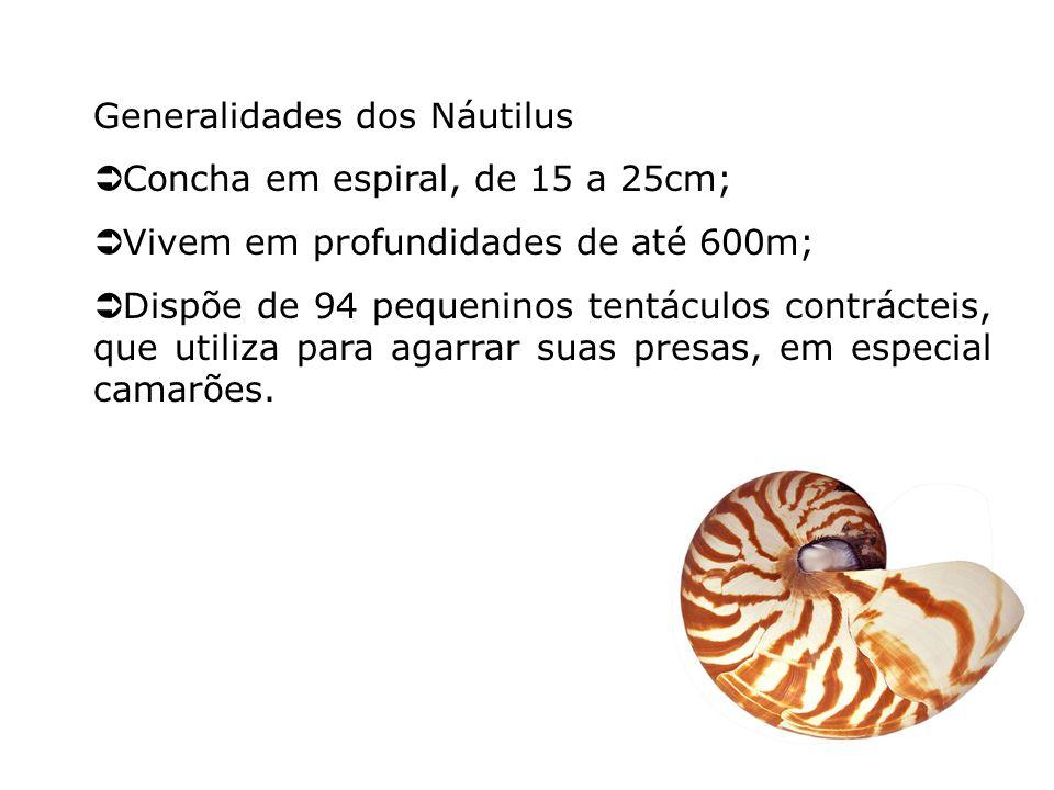 Generalidades dos Náutilus Concha em espiral, de 15 a 25cm; Vivem em profundidades de até 600m; Dispõe de 94 pequeninos tentáculos contrácteis, que ut