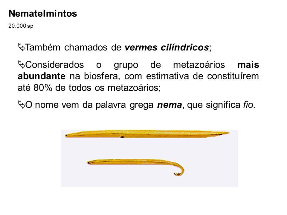 Nematelmintos 20.000 sp Também chamados de vermes cilíndricos; Considerados o grupo de metazoários mais abundante na biosfera, com estimativa de const