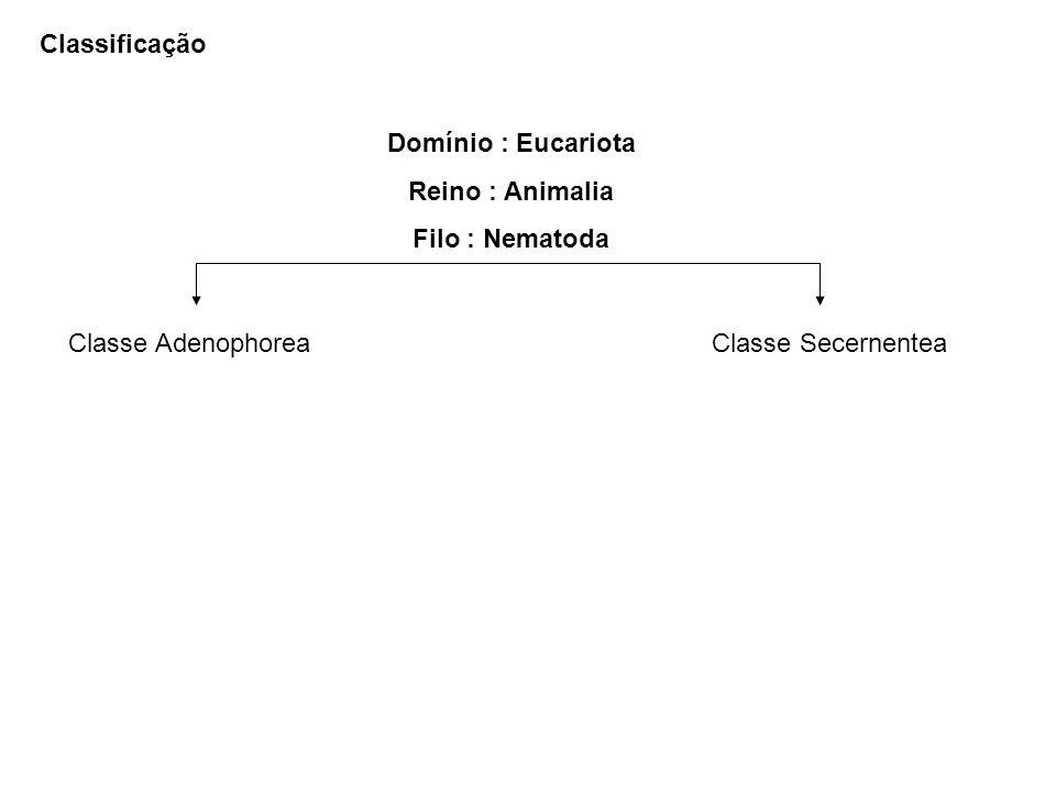 Classificação Domínio : Eucariota Reino : Animalia Filo : Nematoda Classe Adenophorea Classe Secernentea