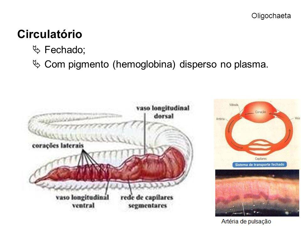 Circulatório Fechado; Com pigmento (hemoglobina) disperso no plasma. Oligochaeta