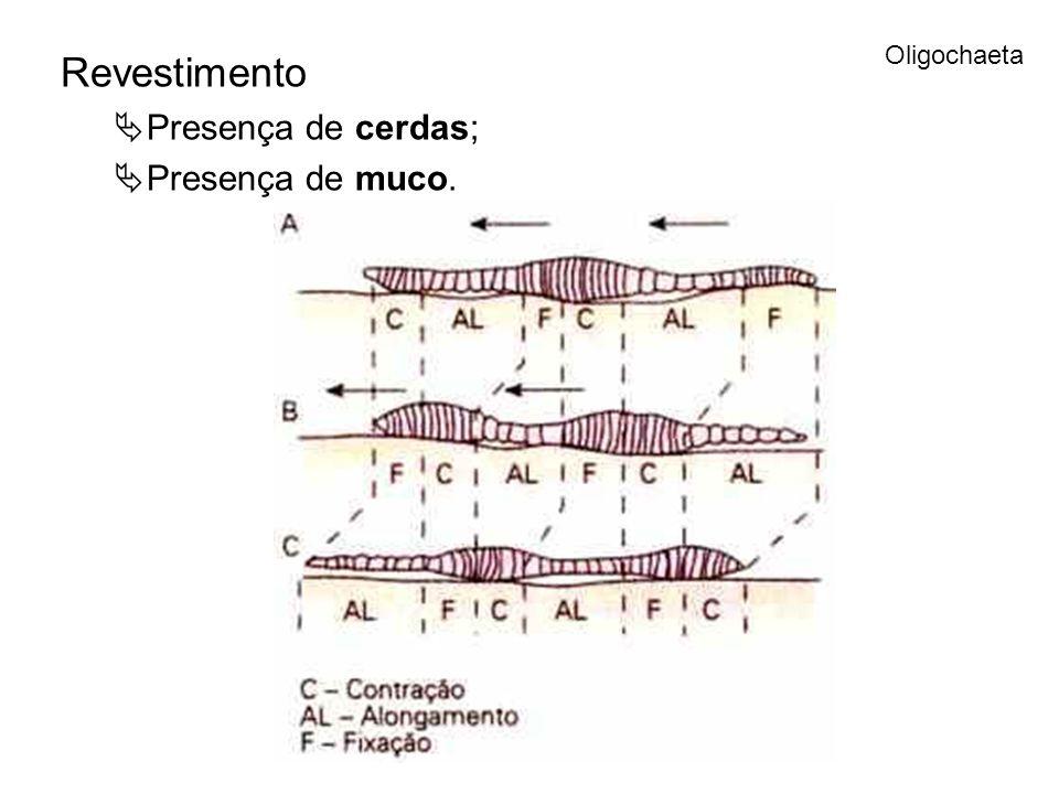 Revestimento Presença de cerdas; Presença de muco. Oligochaeta
