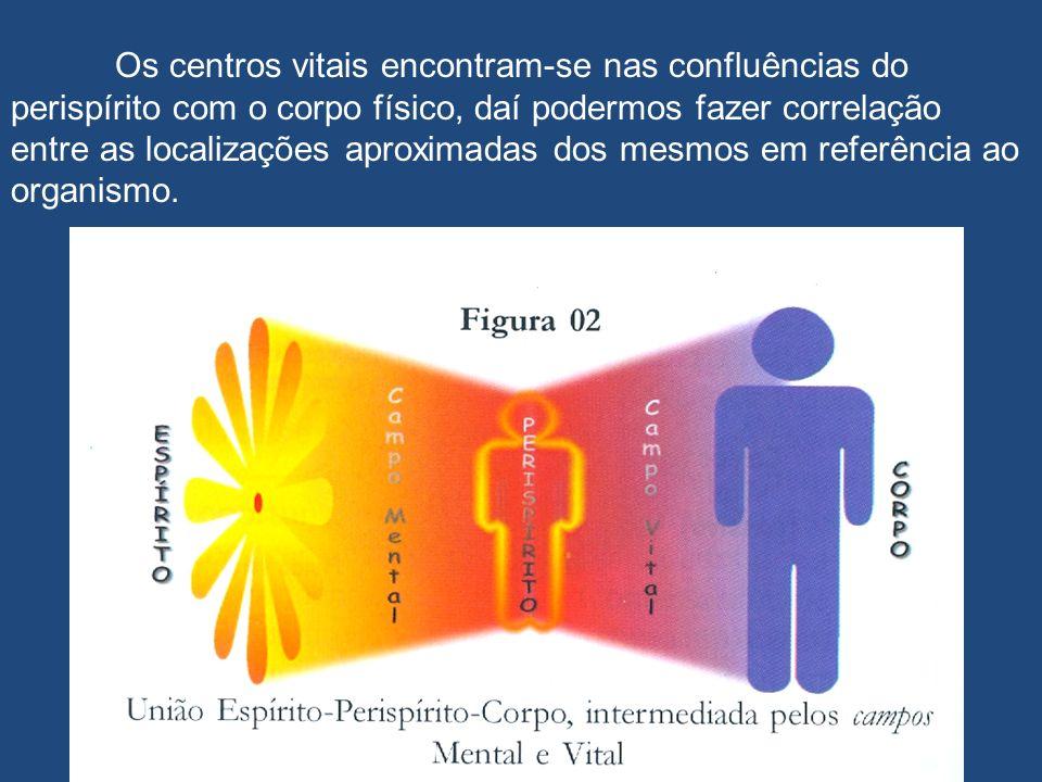 Os centros vitais encontram-se nas confluências do perispírito com o corpo físico, daí podermos fazer correlação entre as localizações aproximadas dos