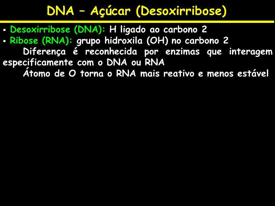 DNA – Açúcar (Desoxirribose) Desoxirribose (DNA): H ligado ao carbono 2 Ribose (RNA): grupo hidroxila (OH) no carbono 2 Diferença é reconhecida por en