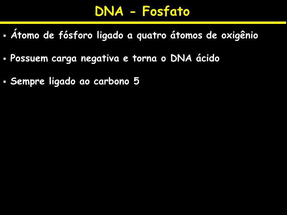 DNA - Fosfato Átomo de fósforo ligado a quatro átomos de oxigênio Possuem carga negativa e torna o DNA ácido Sempre ligado ao carbono 5