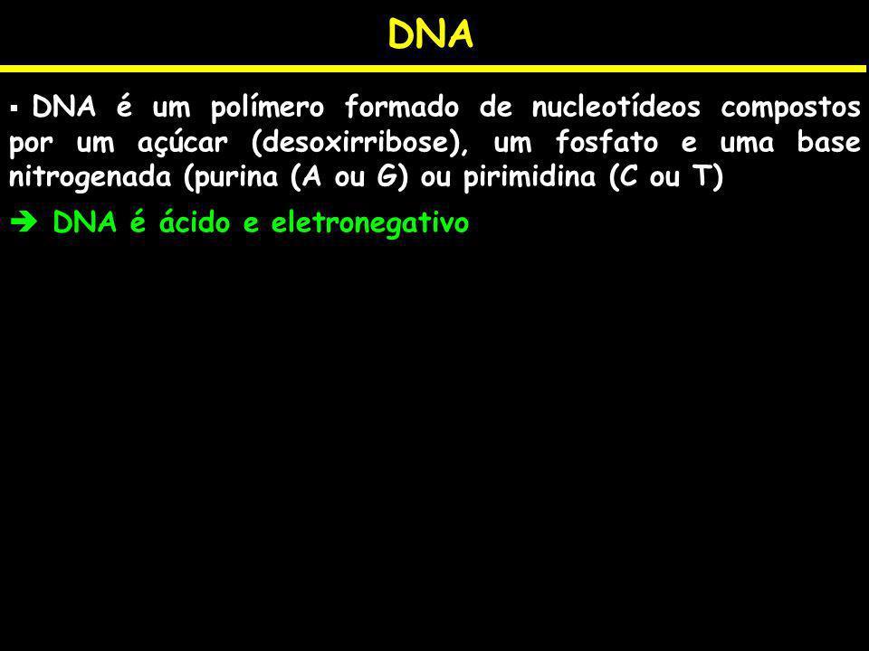DNA DNA é um polímero formado de nucleotídeos compostos por um açúcar (desoxirribose), um fosfato e uma base nitrogenada (purina (A ou G) ou pirimidin