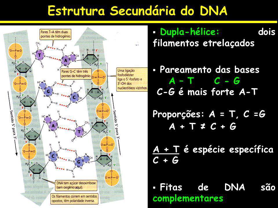 Estrutura Secundária do DNA Dupla-hélice: dois filamentos etrelaçados Pareamento das bases A – T C - G C-G é mais forte A-T Proporções: A = T, C =G A