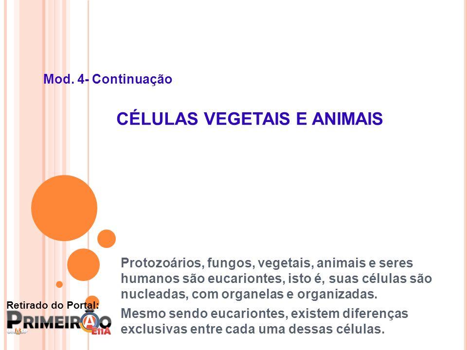 Mod. 4- Continuação CÉLULAS VEGETAIS E ANIMAIS Protozoários, fungos, vegetais, animais e seres humanos são eucariontes, isto é, suas células são nucle