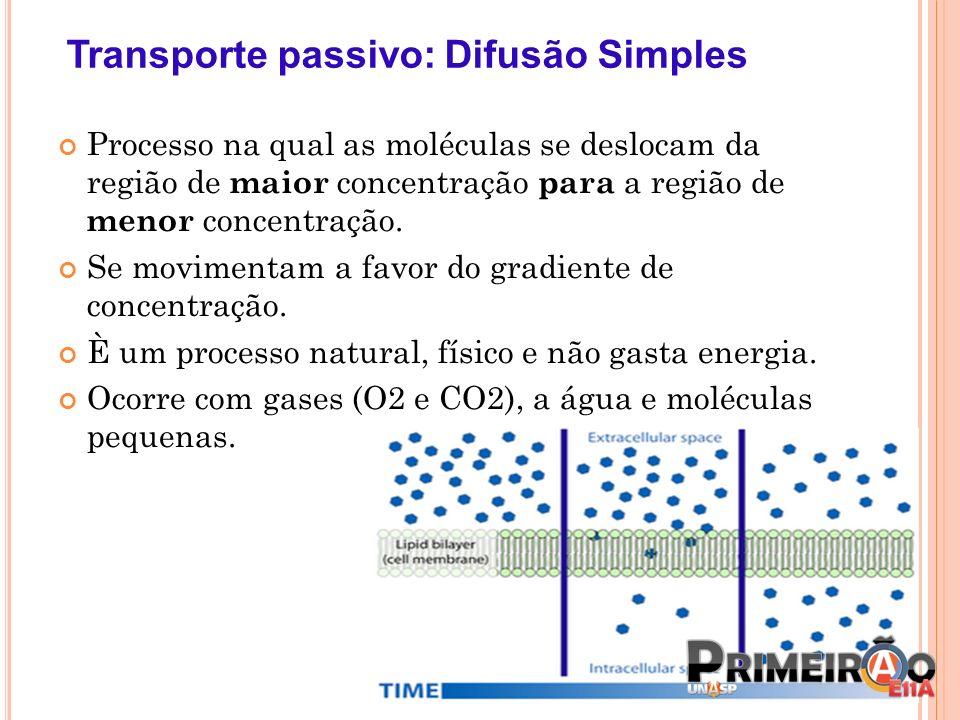 Transporte passivo: Difusão Simples Processo na qual as moléculas se deslocam da região de maior concentração para a região de menor concentração. Se