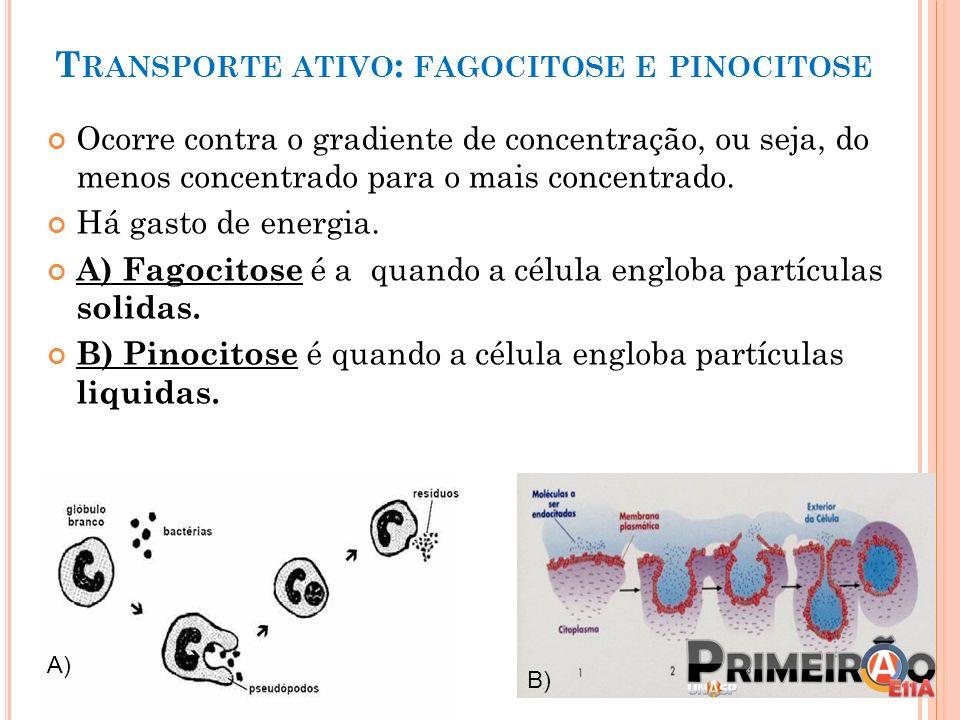 T RANSPORTE ATIVO : FAGOCITOSE E PINOCITOSE Ocorre contra o gradiente de concentração, ou seja, do menos concentrado para o mais concentrado. Há gasto