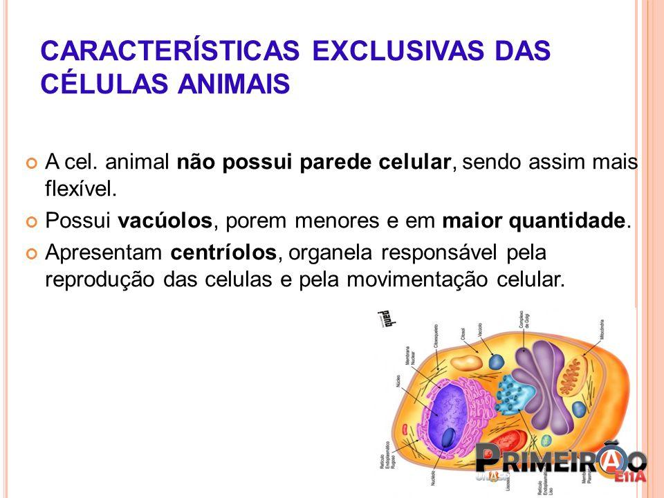 CARACTERÍSTICAS EXCLUSIVAS DAS CÉLULAS ANIMAIS A cel. animal não possui parede celular, sendo assim mais flexível. Possui vacúolos, porem menores e em