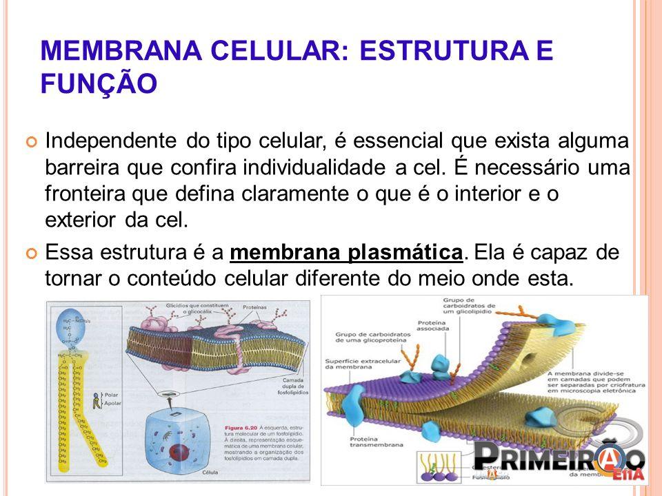 MEMBRANA CELULAR: ESTRUTURA E FUNÇÃO Independente do tipo celular, é essencial que exista alguma barreira que confira individualidade a cel. É necessá