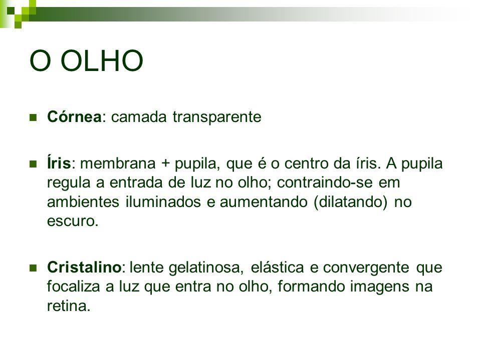 O OLHO Córnea: camada transparente Íris: membrana + pupila, que é o centro da íris. A pupila regula a entrada de luz no olho; contraindo-se em ambient