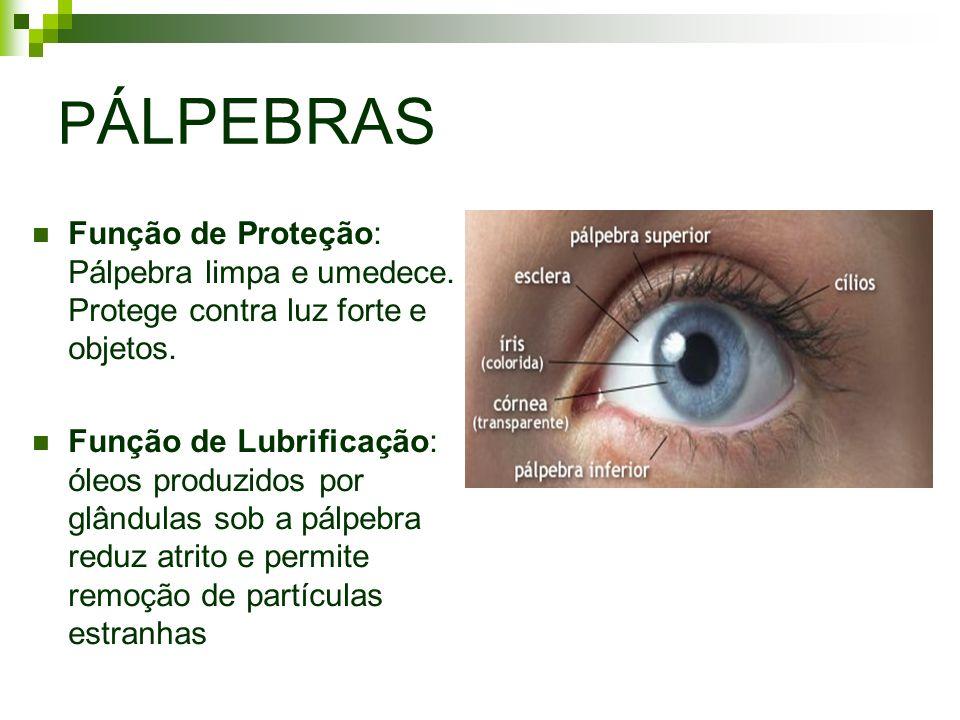 P ÁLPEBRAS Função de Proteção: Pálpebra limpa e umedece. Protege contra luz forte e objetos. Função de Lubrificação: óleos produzidos por glândulas so