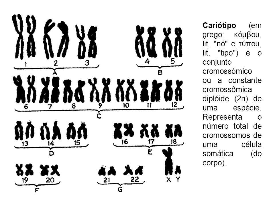 Cariótipo (em grego: κόμβου, lit.