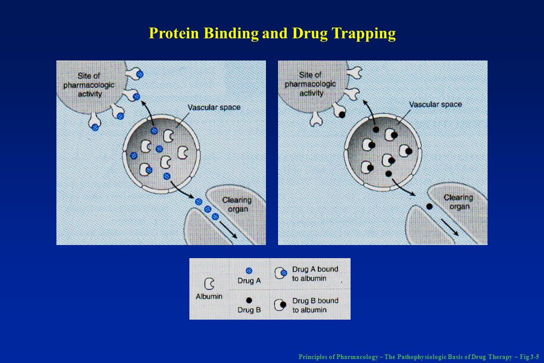 Principles of Pharmacology – The Pathophysiologic Basis of Drug Therapy – Fig 3-5 Protein Binding and Drug Trapping