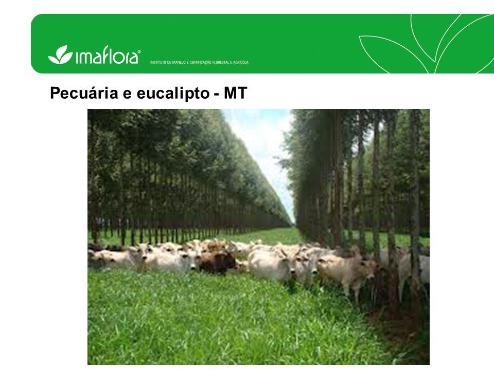 Pecuária e eucalipto - MT