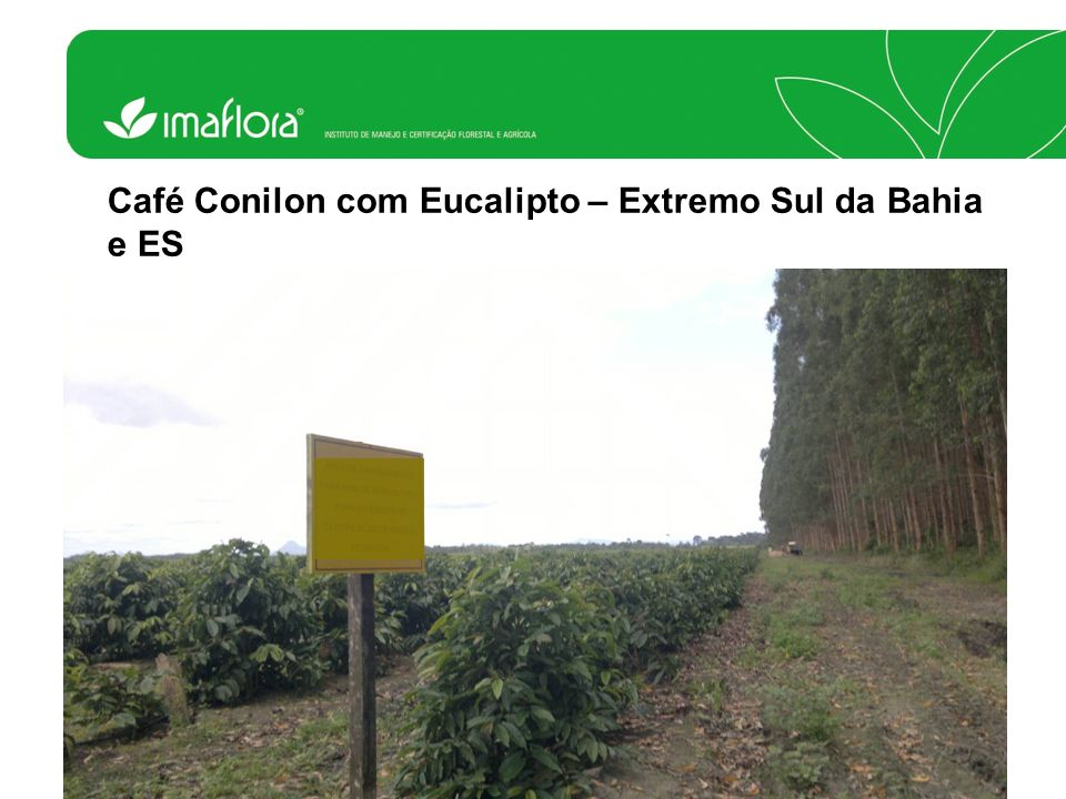 RAS no Brasil Certificados hoje Área total829.677.057 ha Café75.801 ha Pastagens33.263 ha Cana20.942 ha Citros18.832 ha Cacau1.729 ha Frutas (Uva, Abacate, Lichia e Banana) 1.143 ha Pupunha617 há