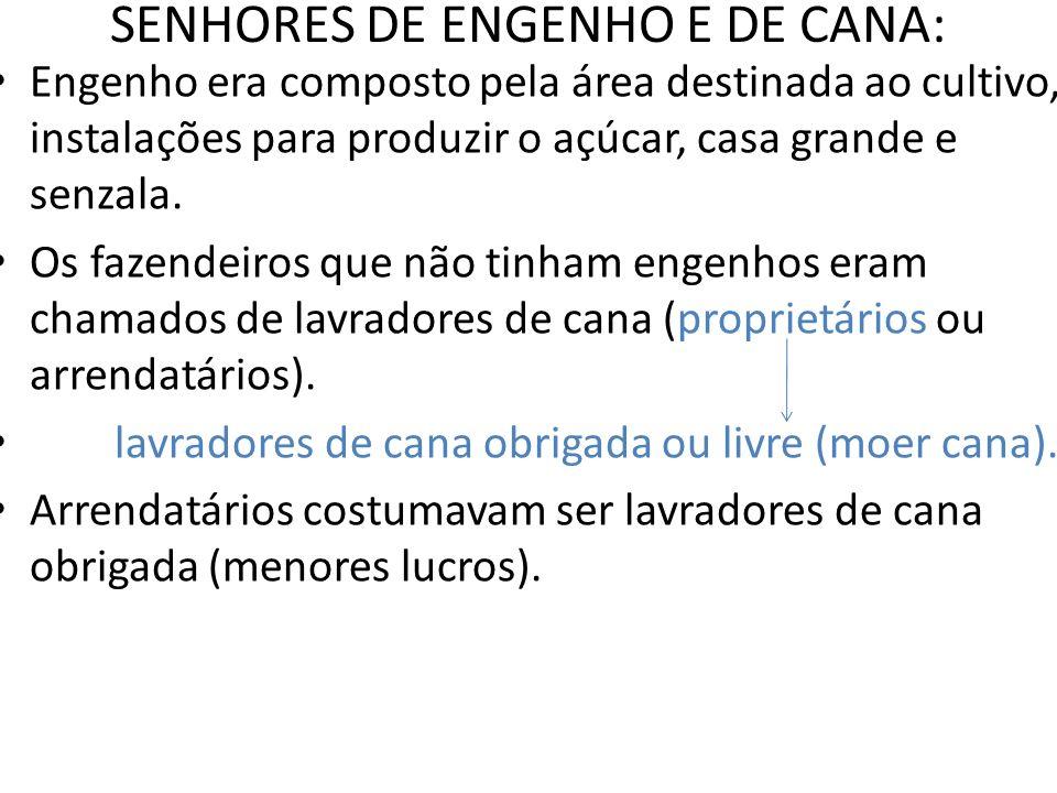 SENHORES DE ENGENHO E DE CANA: Engenho era composto pela área destinada ao cultivo, instalações para produzir o açúcar, casa grande e senzala. Os faze