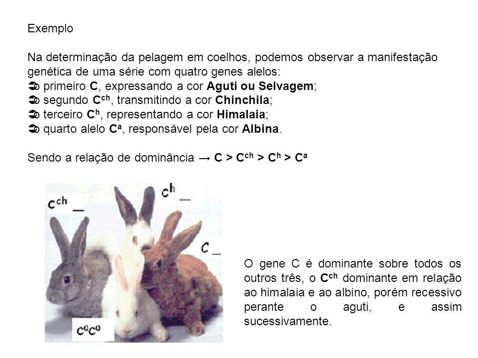 Exemplo Na determinação da pelagem em coelhos, podemos observar a manifestação genética de uma série com quatro genes alelos: o primeiro C, expressand