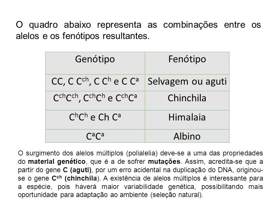 O quadro abaixo representa as combinações entre os alelos e os fenótipos resultantes. GenótipoFenótipo CC, C C ch, C C h e C C a Selvagem ou aguti C c