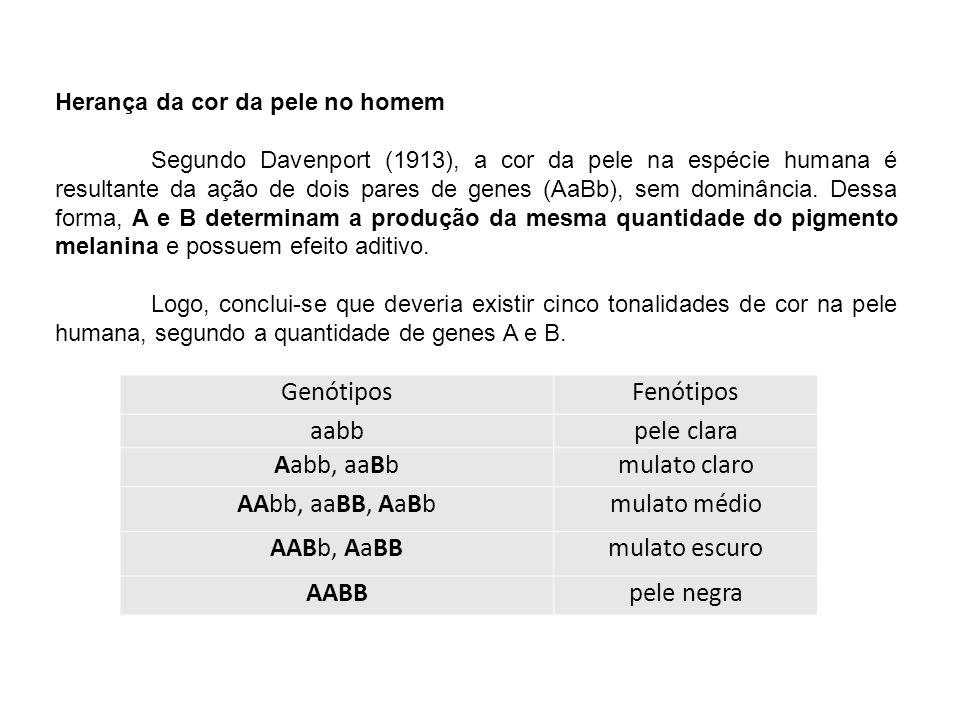Herança da cor da pele no homem Segundo Davenport (1913), a cor da pele na espécie humana é resultante da ação de dois pares de genes (AaBb), sem domi