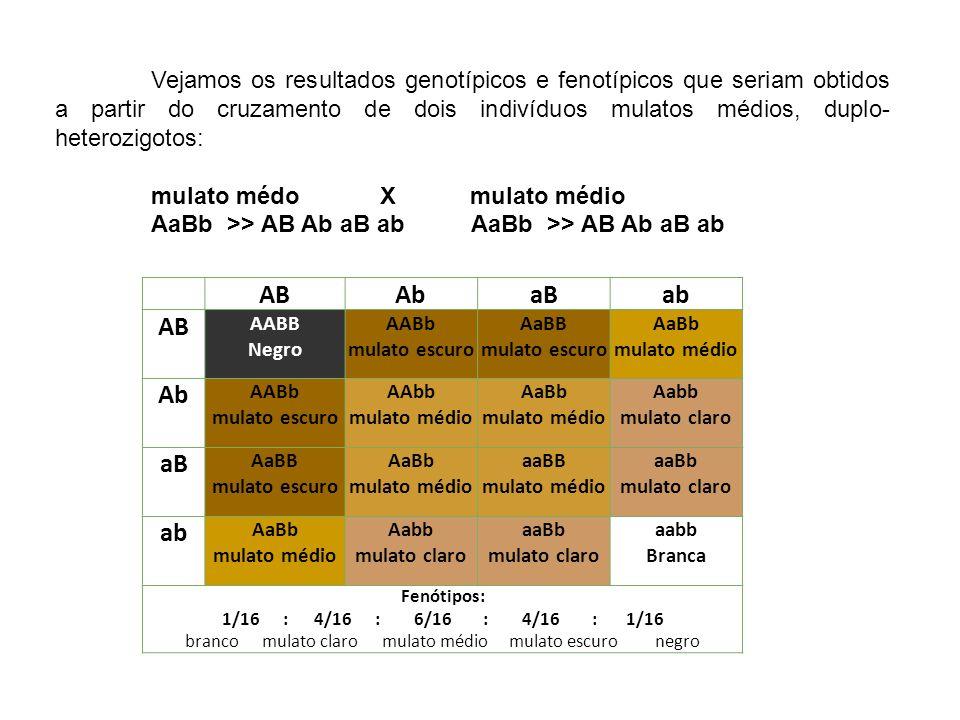 Vejamos os resultados genotípicos e fenotípicos que seriam obtidos a partir do cruzamento de dois indivíduos mulatos médios, duplo- heterozigotos: mul
