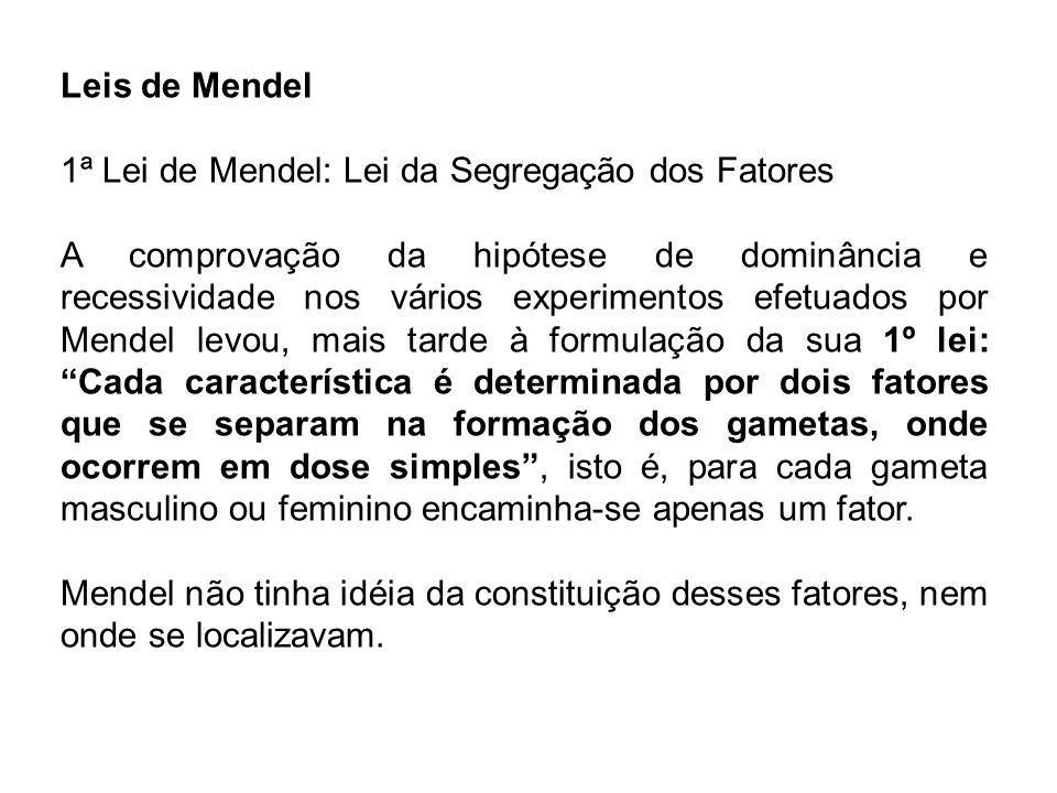 As bases celulares da segregação A redescoberta dos trabalhos de Mendel, em 1900, trouxe a questão: onde estão os fatores hereditários e como eles se segregam?