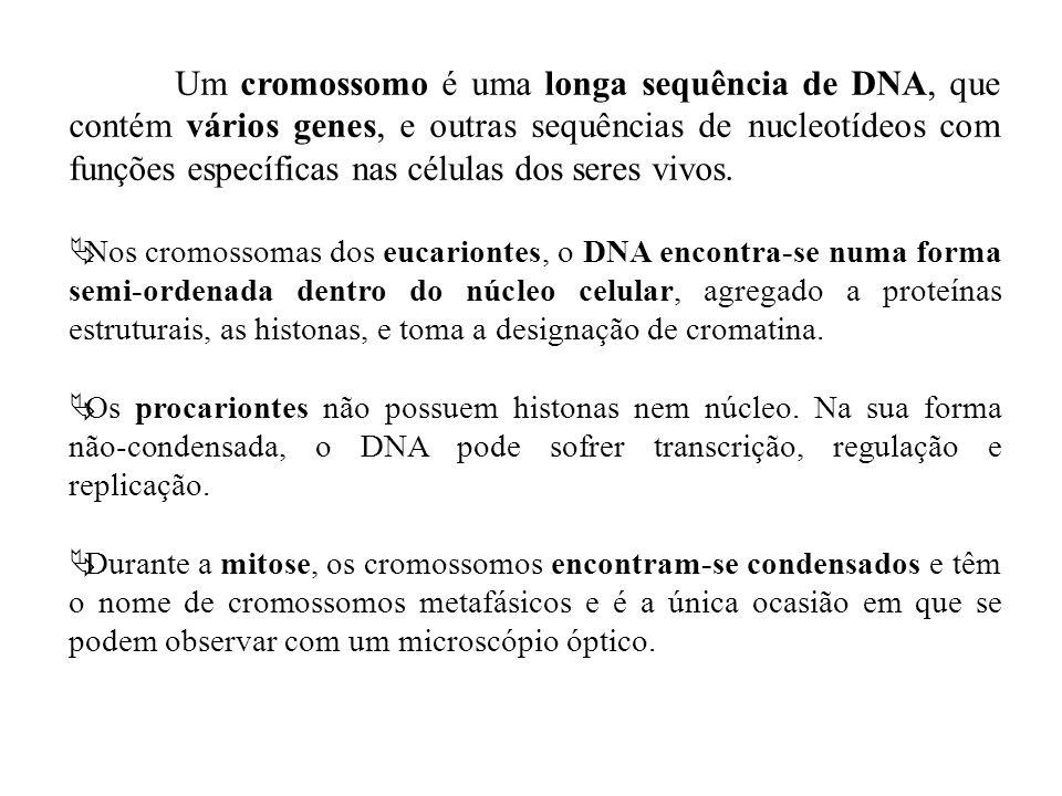 Um cromossomo é uma longa sequência de DNA, que contém vários genes, e outras sequências de nucleotídeos com funções específicas nas células dos seres