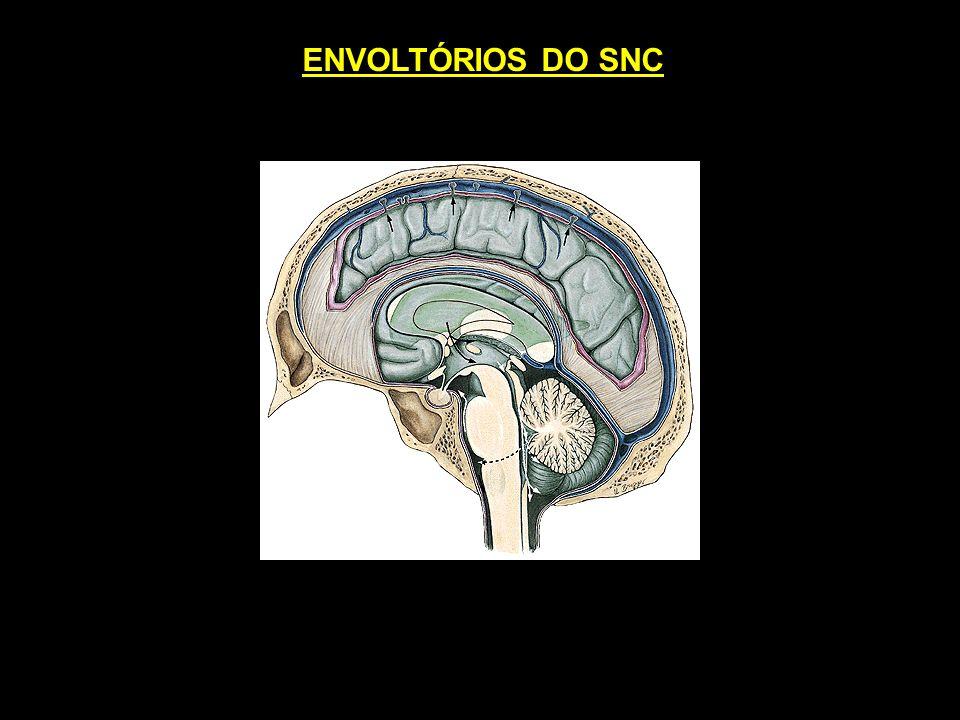 ENVOLTÓRIOS DO SNC