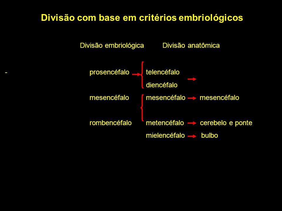 Divisão com base em critérios embriológicos Divisão embriológica Divisão anatômica - prosencéfalotelencéfalo diencéfalo mesencéfalo mesencéfalo mesenc