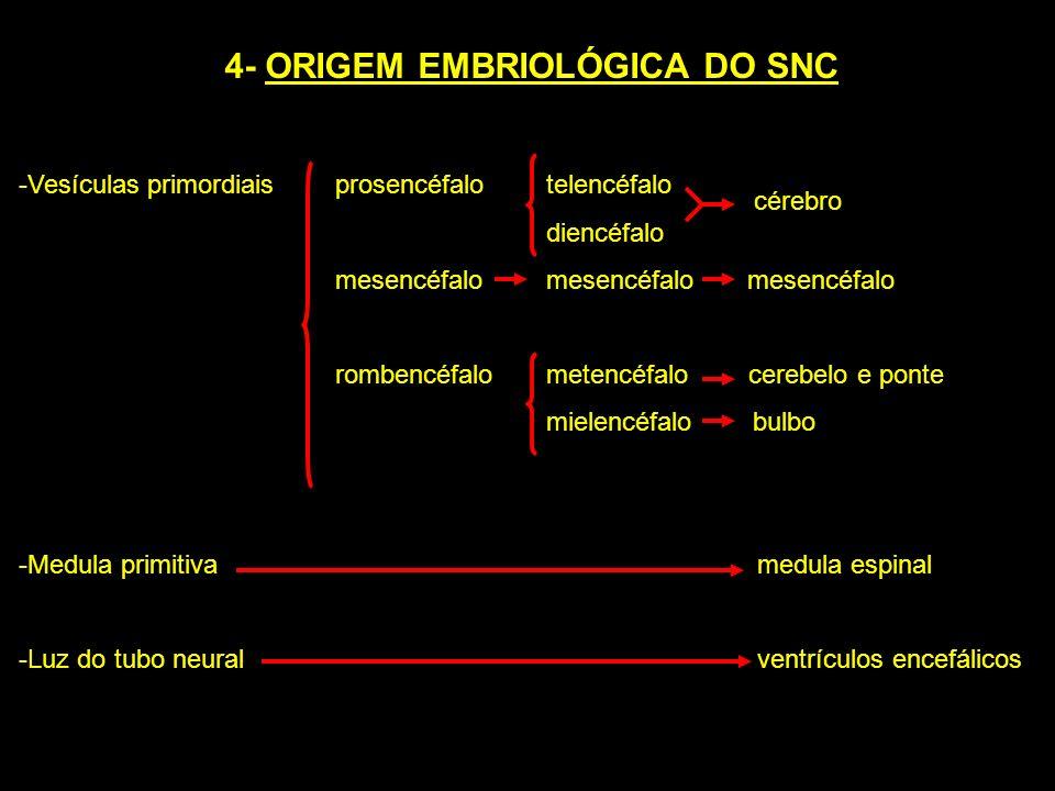 4- ORIGEM EMBRIOLÓGICA DO SNC -Vesículas primordiais prosencéfalotelencéfalo diencéfalo mesencéfalo mesencéfalo mesencéfalo rombencéfalometencéfalo ce