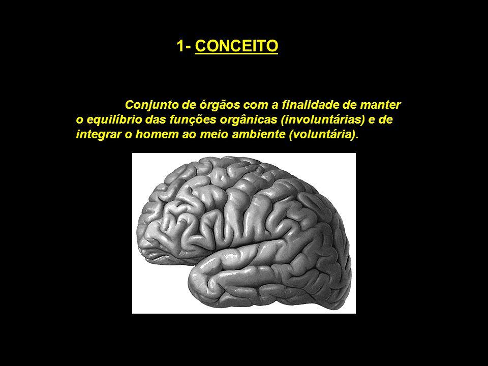 1- CONCEITO Conjunto de órgãos com a finalidade de manter o equilíbrio das funções orgânicas (involuntárias) e de integrar o homem ao meio ambiente (v
