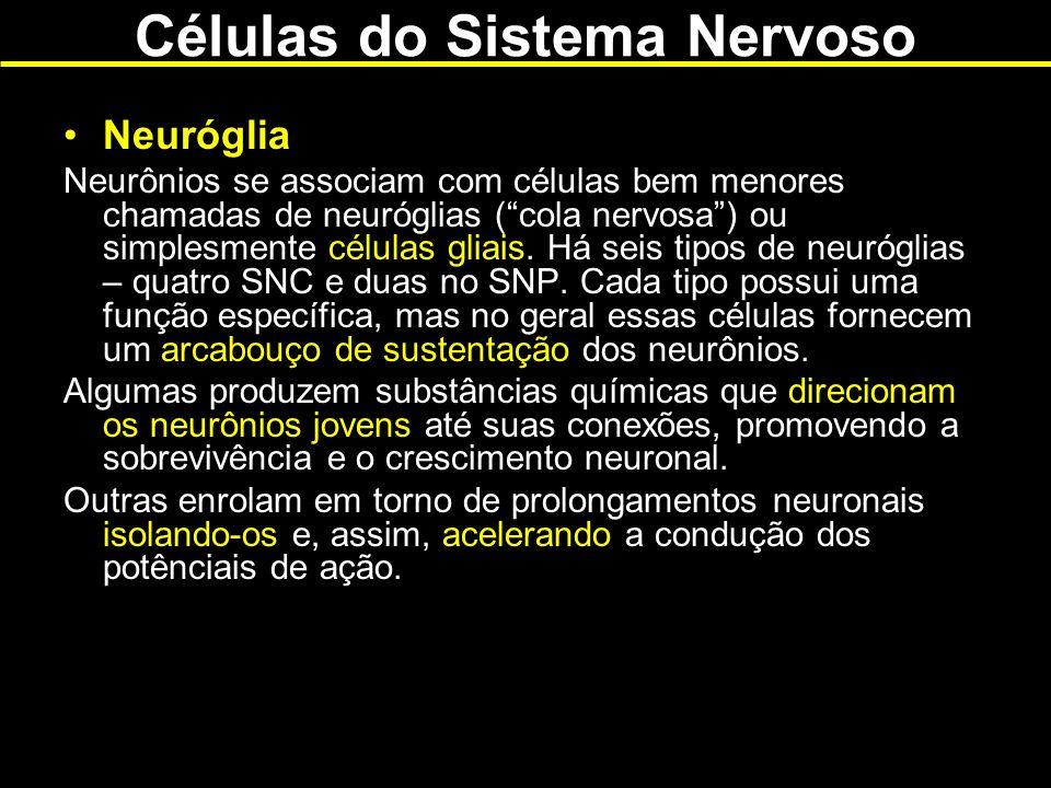 Neuróglia Neurônios se associam com células bem menores chamadas de neuróglias (cola nervosa) ou simplesmente células gliais. Há seis tipos de neurógl
