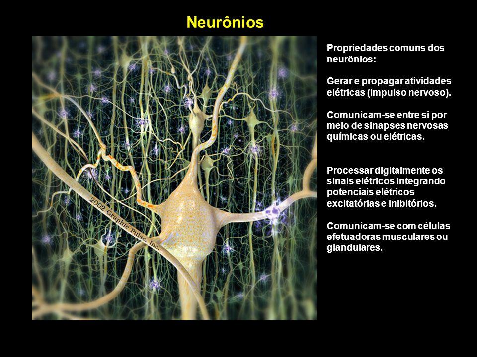 Propriedades comuns dos neurônios: Gerar e propagar atividades elétricas (impulso nervoso). Comunicam-se entre si por meio de sinapses nervosas químic