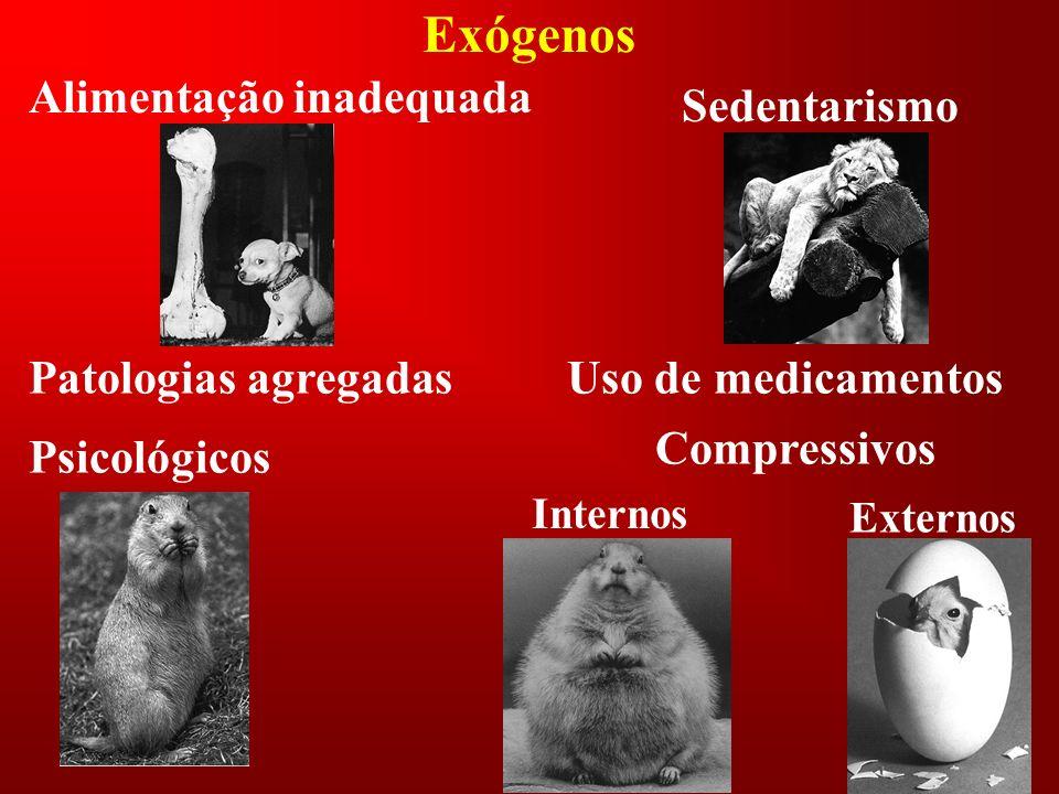 Exógenos Alimentação inadequada Sedentarismo Patologias agregadasUso de medicamentos Psicológicos Externos Compressivos Internos