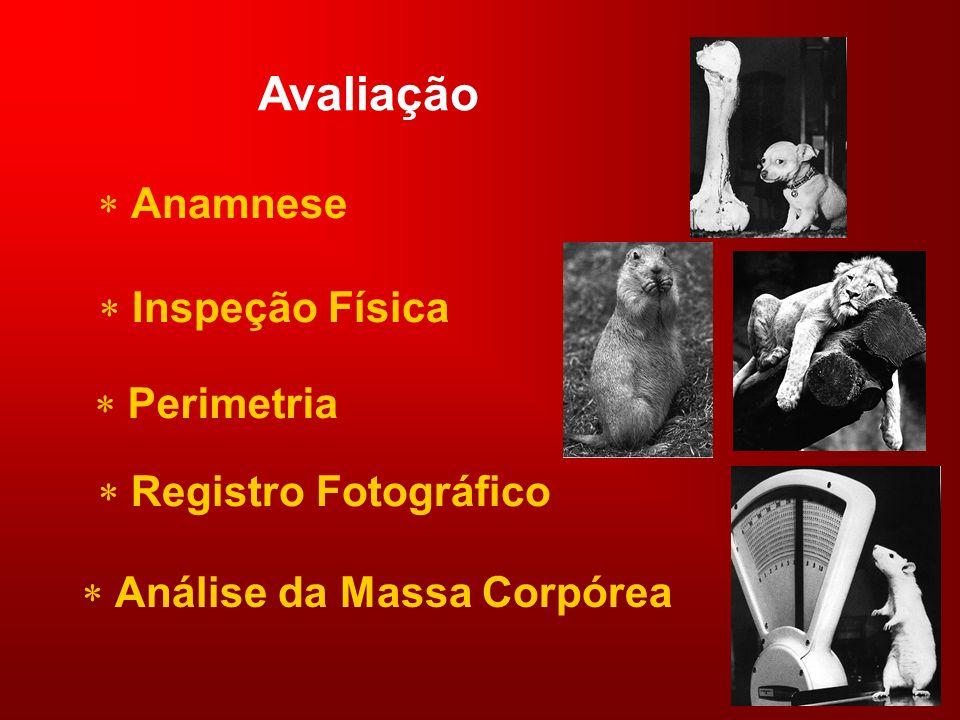 Avaliação Anamnese Inspeção Física Perimetria Registro Fotográfico Análise da Massa Corpórea