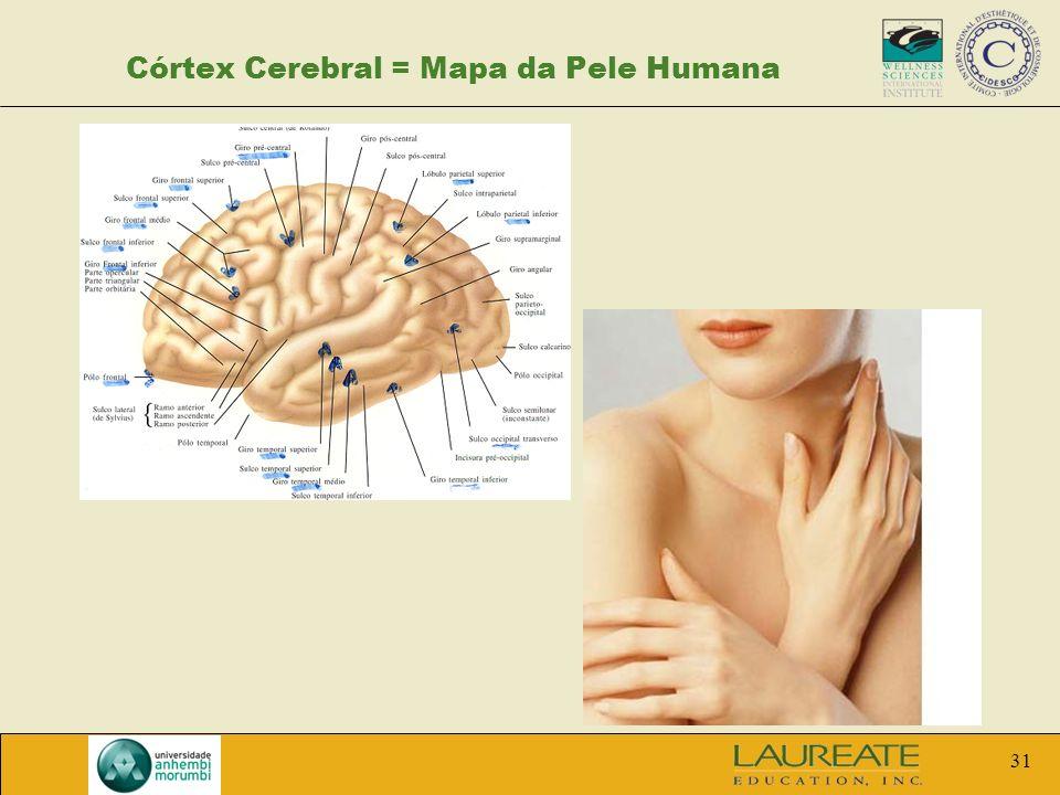31 Córtex Cerebral = Mapa da Pele Humana