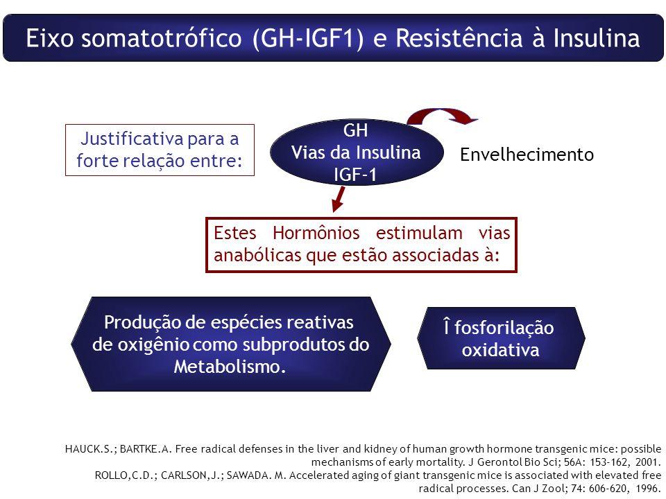 Eixo somatotrófico (GH-IGF1) e Resistência à Insulina Justificativa para a forte relação entre: GH Vias da Insulina IGF-1 Envelhecimento Estes Hormônios estimulam vias anabólicas que estão associadas à: Î fosforilação oxidativa Produção de espécies reativas de oxigênio como subprodutos do Metabolismo.