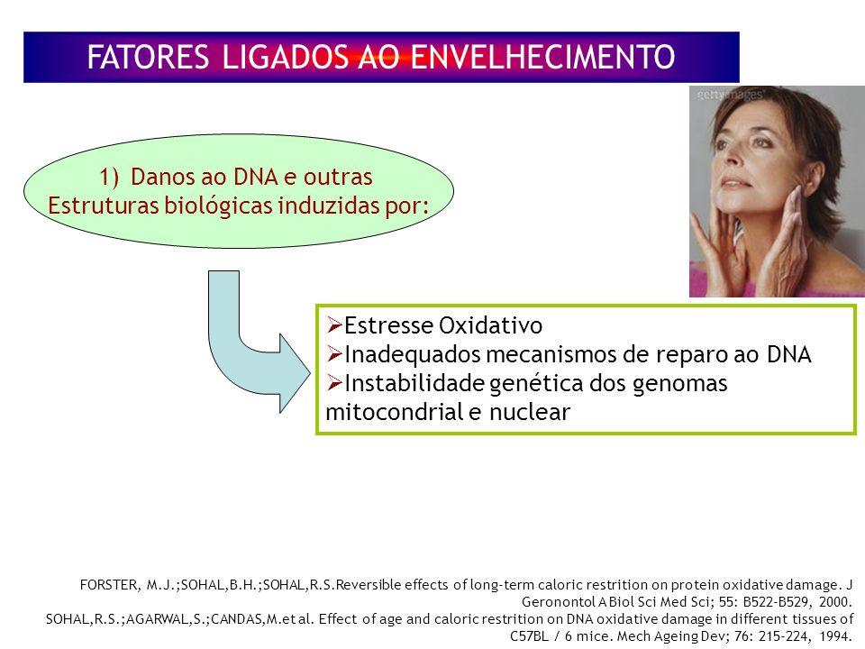 FATORES LIGADOS AO ENVELHECIMENTO 1) 1)Danos ao DNA e outras Estruturas biológicas induzidas por: Estresse Oxidativo Inadequados mecanismos de reparo ao DNA Instabilidade genética dos genomas mitocondrial e nuclear FORSTER, M.J.;SOHAL,B.H.;SOHAL,R.S.Reversible effects of long-term caloric restrition on protein oxidative damage.