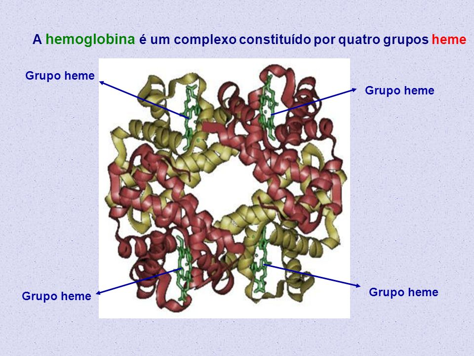 Grupo heme A hemoglobina é um complexo constituído por quatro grupos heme Grupo heme