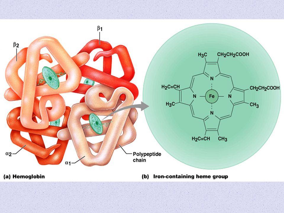 Cada grupo heme é um complexo de ferro ( II ) de geometria octaédrica, coordenado por quatro ligações com uma molécula de porfirina (tetradentada) e outras duas ligações perpendiculares a esta molécula, uma delas disponível para a ligação aos gases da respiração O 2 e CO 2 Complexo heme