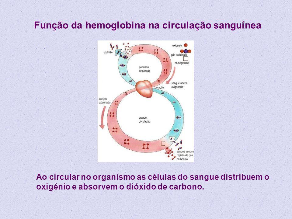 Como existem 4 grupos heme, cada hemoglobina pode transportar 4 moléculas de oxigénio A ligação ao oxigénio é cooperativa: a ligação num grupo heme aumenta a tendência para a ligação no segundo e assim sucessivamente As trocas gasosas nas células dão-se através da reacção: HbO 2 (aq) + CO 2 (g) HbCO 2 (aq) + O 2 (g) A estabilidade do complexo oxigenado aumenta com a basicidade do meio A libertação de oxigénio nos tecidos é facilitada pelo pequeno abaixamento do pH resultante da presença do CO 2 formado na respiração celular.